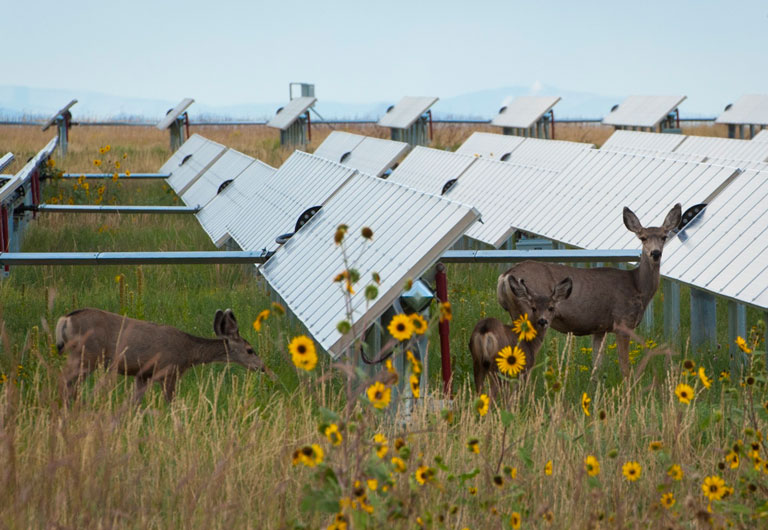 An image of deer around solar panels.