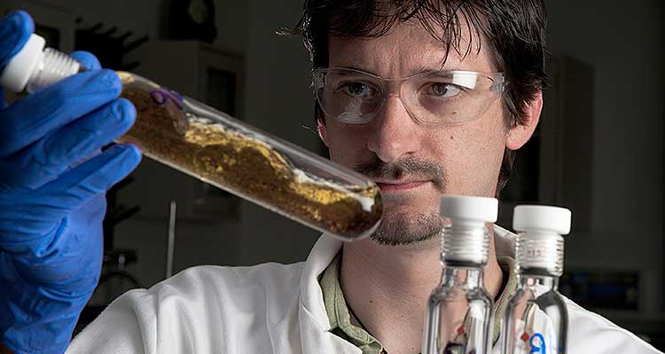 man looking at test tubes containing clear, amber liquid