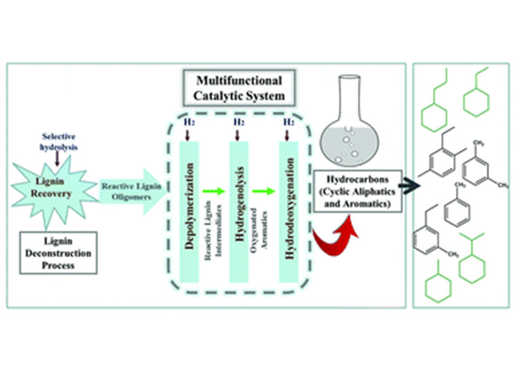"An image of a diagram showing the ""Lignin Deconstruction Process:"" 1) ""Lignin Recovery"" and ""Selective Hydrolysis;"" 2) ""Reactive Lignin Oligomers;"" 3) ""Multifunctional Catalytic System""""Depolymerization (Reactive Lignin Intermediares),"" ""Hydrogenolysis (Oxygenated Aromatics),"" and ""Hydrocoxygenation;"" and 4) ""Hydrocarbons (Cyclic Alliphatics and Aromatics) with an arrow pointing to an image representing deconstructed lignin cellular structure"