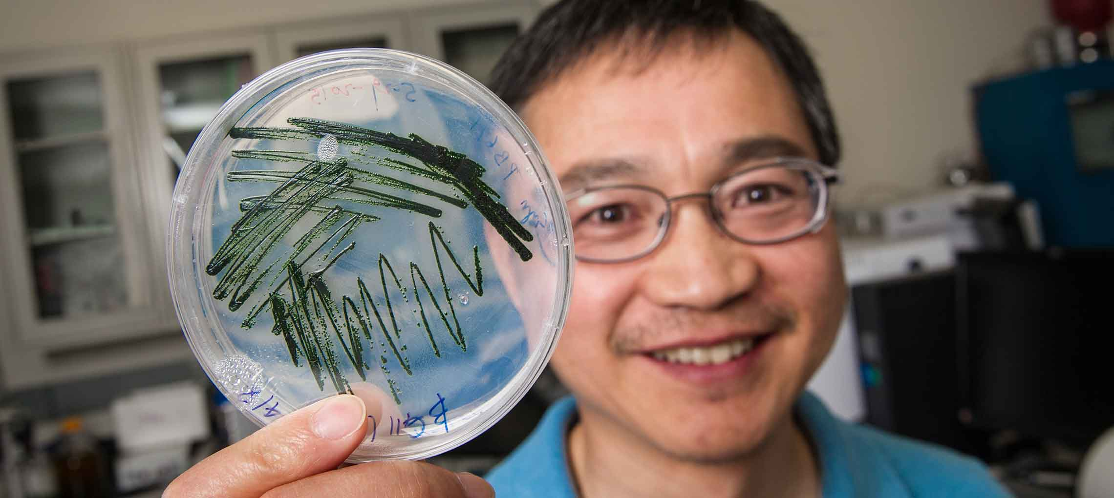 A scientist holds a petri dish containing algae.