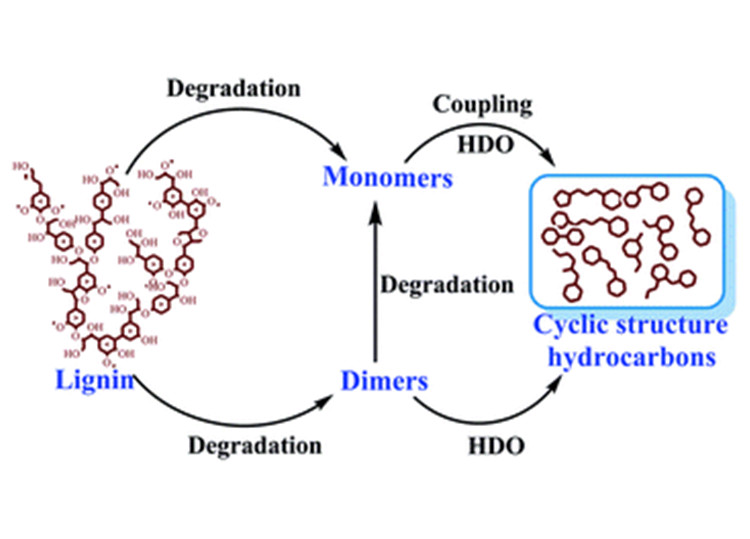 "Image of a diagram with a curved line extending from ""Lignin"" to ""Degradation"" and an arrow pointing to ""Monomers,"" from which another curved line extends to ""Coupling HDO,"" with an arrow pointing at ""Cyclic structure hydrocarbons. Another curved line extends from ""Lignin"" to ""Degradation"" with an arrow pointing to ""Dimers"" with two arrows: one pointing to ""Degradation"" and then to ""Monomers; and the other to ""HDO"" pointing to ""Cyclic structure hydrocarbons"""