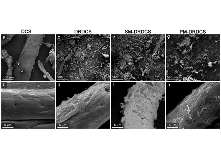 Eight black-and-white micrograph images of corn stover