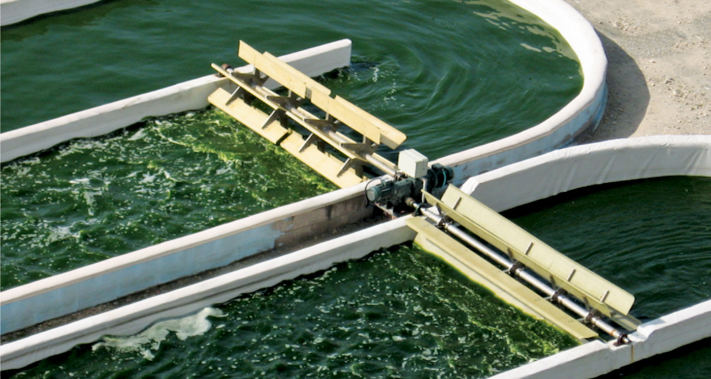 Photo of two algae raceway ponds that show large-scale algae biomass production in the form of two oval-shaped pools filled with dark green liquid and a paddle-wheel in each pool that is agitating the liquid as it flows around.