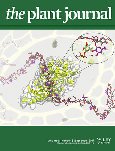 Image of the cover of The Plant Journal showing intertwined, ribbon-like structures in grey and yellow with a ribbon of interconnected red, grey, and purple hexagonal shapes crossing over the grey and yellow structure. There is an inset image of a close up of the center of the ribbon-like structures.