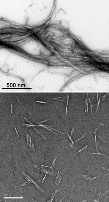 Two black-and-white transmission electron microscope images. The top shows dark hair-like strands, overlapping each other on a white background with other lighter hair-like strands underneath. The image is labeled with a line measurement of 500 nm in the lower left that is about one quarter of the width of the entire image. The bottom shows grey, rice-like, long grains scattered over a darker background. The image is labeled with a line measurement of 200 nm in the lower left that is about one quarter of the width of the entire image.