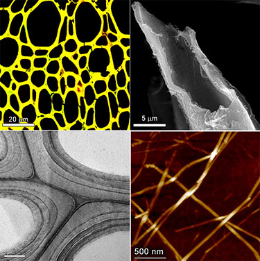 Four electron microscope photos set up in a quadrant. The top left shows a honeycomb web of yellow on a black background. The top right shows a black and white image of a ragged tube that has been cut at an angle. The bottom left shows partial circles in black and white with darker grey outer rings. The bottom right shows thin, straw-like strands that cross each other on a dark brown background.