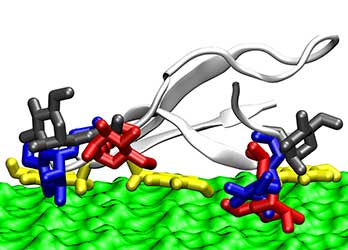 Illustration of a carbohydrate binding domain (white cartoon with colored licorice-shaped sugars decorating it) on a cellulose surface (depicted as green solvent-accessible surface