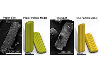 microscopic photos of poplar and pine particles and their respective 3D models