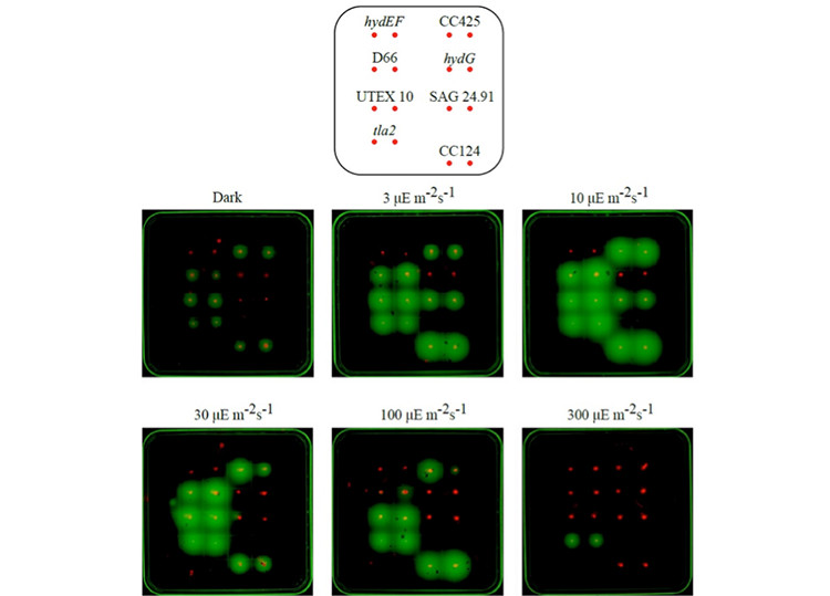 Image of six black squares with green dots, some more than others: one is labeled dark, while the others are labeled with mathematical equations.