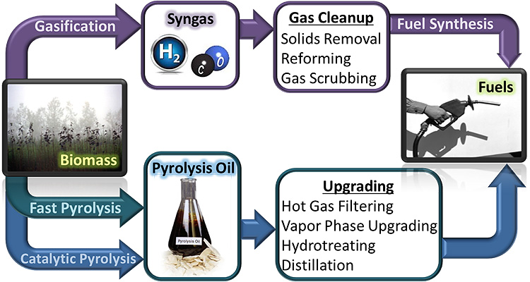 "Flow diagram describing the major steps in three primary thermochemical pathways. The figure starts with a photo of a forest labeled ""Biomass"". The purple arrows of ""Gasification"" lead to ""Syngas,"" represented by spheres of hydrogen and carbon monoxide, then to ""Gas Cleanup, Solids Removal, Reforming, and Gas Scrubbing,"" and then on to ""Fuel Synthesis"" and finally ""Fuels,"" represented by a gasoline dispenser nozzle. A green arrow of ""Fast Pyrolysis"" and blue arrows for ""Catalytic Pyrolysis"" lead to ""Pyrolysis Oil,"" represented by a flask with brown liquid, then on to ""Upgrading, Hot Gas Filtering, Vapor Phase Upgrading, Hydrotreating, and Distillation,"" and finally to ""Fuels,"" represented by a gasoline dispenser nozzle"
