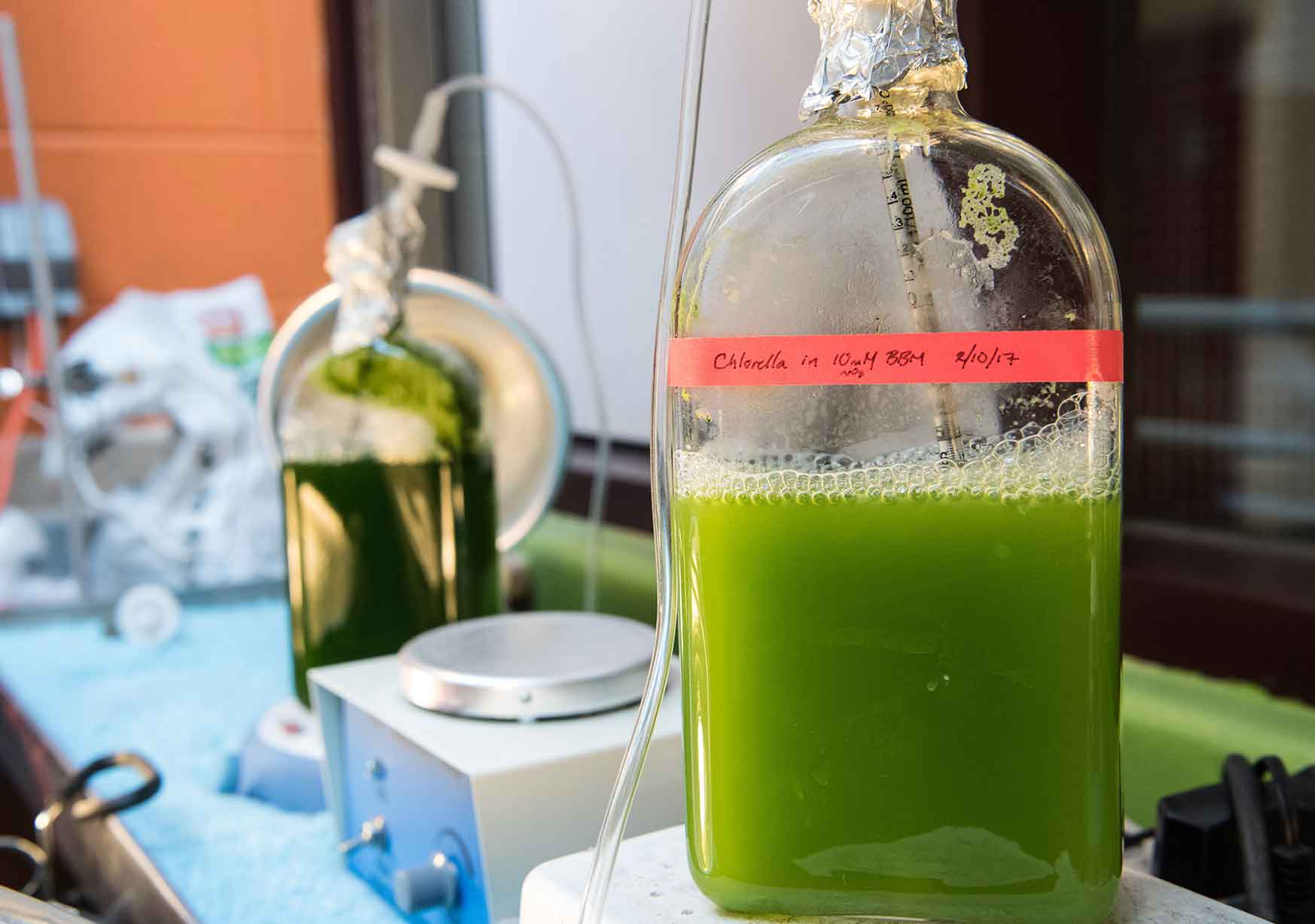 Photo shows a large bottle filled with a green liquid.