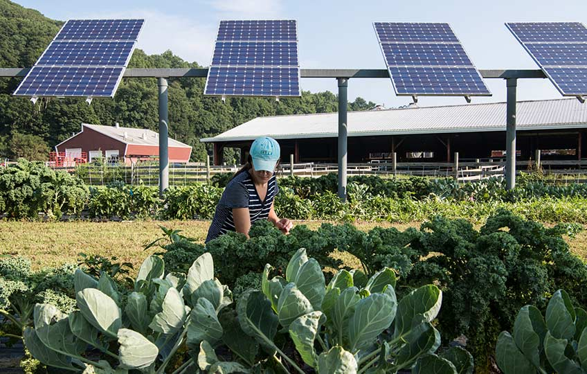 A woman tends to edible plants in front of a row of solar panels.