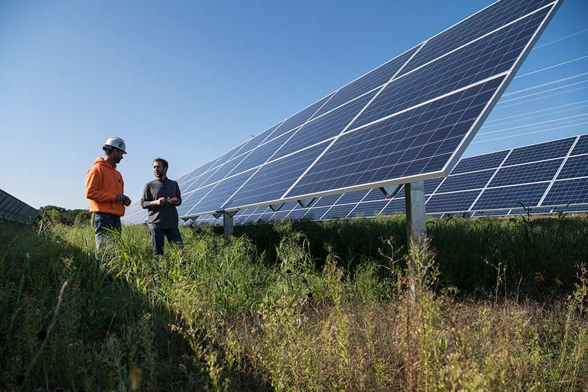 Beneath Solar Panels, the Seeds of Opportunity Sprout