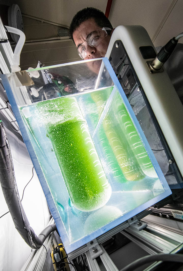 A scientist adjusts a large algae-containing beaker connected to instruments within a bath of water.