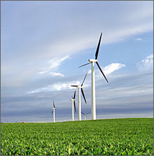 Photo of several large wind turbines in a corn field with a cloudy sky.