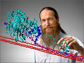 A computer-aided image combines a photo of a man with a three-dimensional, computer-generated image. The man has long brown hair and a long beard. He is wearing a blue shirt. He is standing behind a projected image of the molecular structure of an enzyme that digests the tough cellulosic fibers in plants. He points to the image with his finger. The molecule is shaped like a long-necked dinosaur. Its components appear as squiggly lines colored in turquoise and dark blue. Elements of the cellulose look like straight strands of barbed wire colored in red and purple.