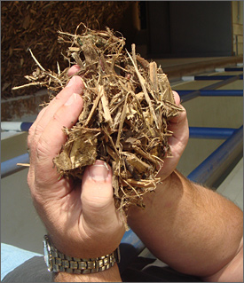 Photo of hands holding wood chips, with a much larger pile of chips in the background.
