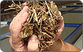 Wood Chips to Heat Laboratories, Save Natural Gas