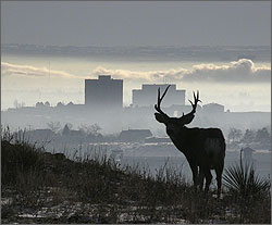 Photo of a deer in shadow standing on a hill side with building and clouds in the background.