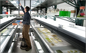 In a photo, NREL researcher Lee Elliott reaches up to a high shelf in a brightly lit room that holds dozens of samples of growing algae. Some of the samples rest in trays, others are in beakers.