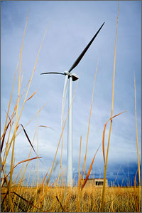 This photo from ground level shows yellow grasses with the white wind turbine in the background.
