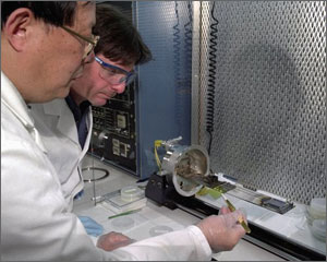Two scientists in lab coats look at a small sample of a photovoltaic material.