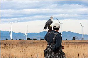 Photo of a man holding a falcon with a field of wind turbines in the background.