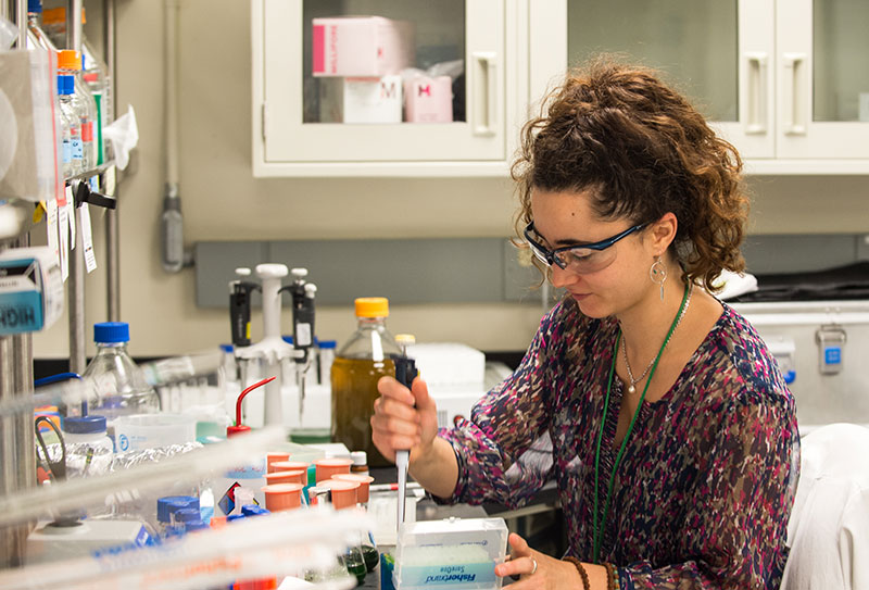 A researcher in the laboratory performs experiments on cyanobacteria.