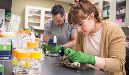 News Release: NREL, UK University Partner To Dive Deeper Into How Enzymes Digest Plastic