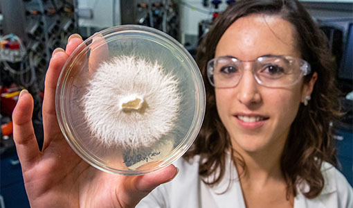 News Release: Groundbreaking Research into White-Rot Fungi Proves Its Value in Carbon Sequestration from Lignin