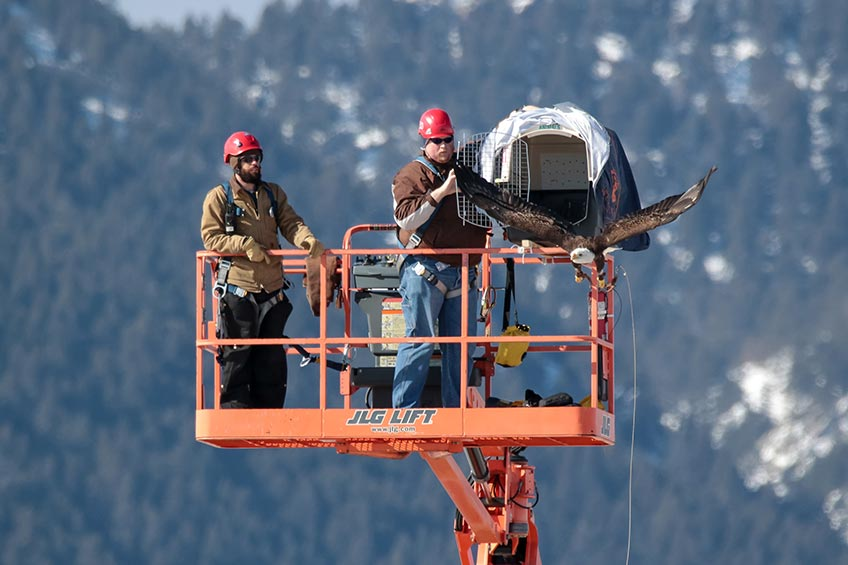 NREL Announces Project Selections to Address Wind-Wildlife Operations Challenges