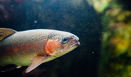 Nine Teams Swim Toward the Fish Protection Grand Prize at the American Fisheries Society Virtual Annual Meeting