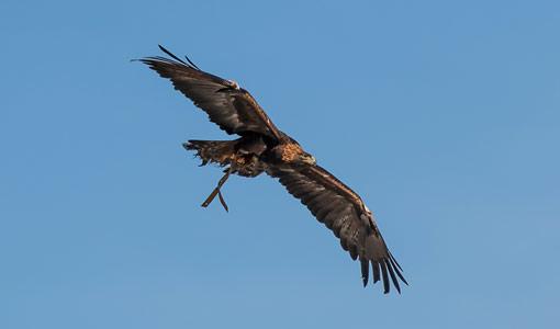 Novel Modeling Tool Seeks Insight into Eagle Flight at Wind Plants