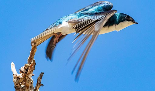 NREL and Project Partners Team-Up To Advance Species Conservation and Wind Energy Deployment