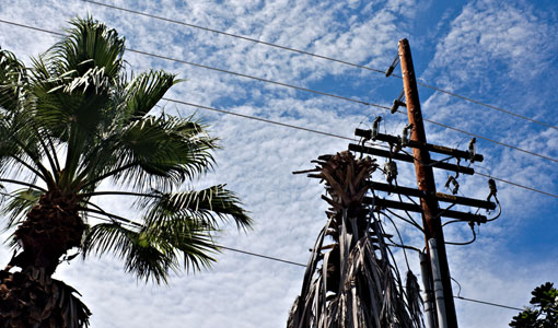 Transmission lines next to palm trees