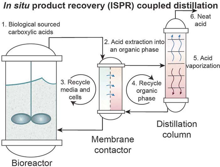 In situ product recovery (ISPR) coupled distillation in a bioreactor, membrane contactor and distillation column: biological sourced carboxylic acids to acid extraction into an organic phase to recycle media and cells or recycle organic phase then acid vaporization and neat acid.