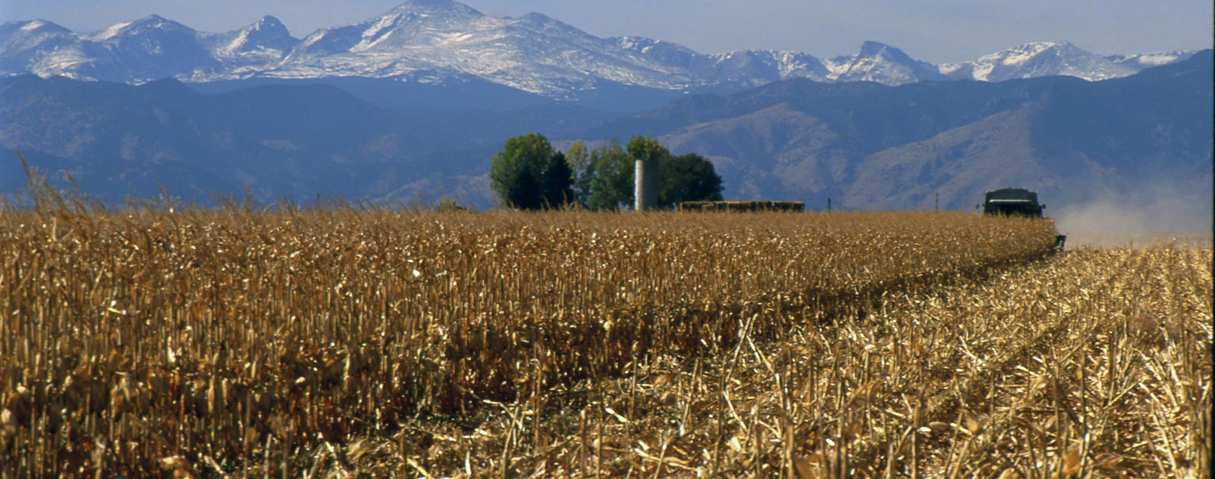 Cornstalks in a field with mountains in the background.